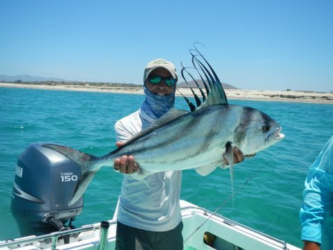 Fish Tales 082