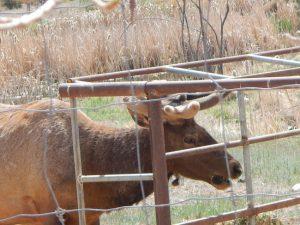 Lc Ranch Apr 2015 09
